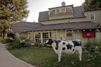 Nancy Cartwright's Fiberglass Cow Milk Dud