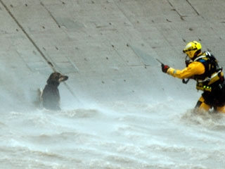 AP - Firefighter Saves Dog