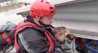 Cat floats in cat litter rescued