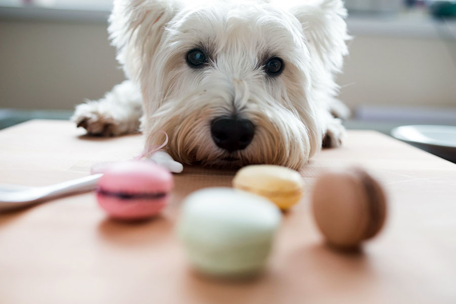 Xylitol can kill your dog