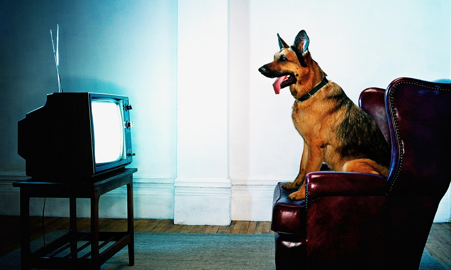 Will your dogs choose what they watch on TV