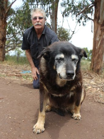 Worlds Oldest Dog