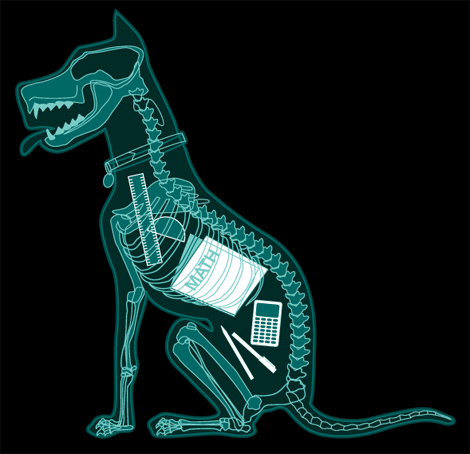 Dog X-Ray on Animal Radio®
