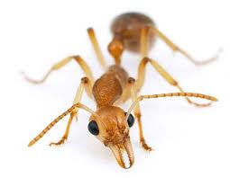Ants are pretty curious creatures