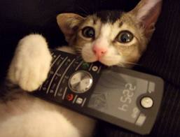 Pet vs Smartphone
