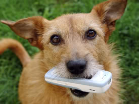 Ditch Your Cell In The Vets Office
