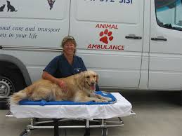 Cheryl Bradys Animal Ambulance