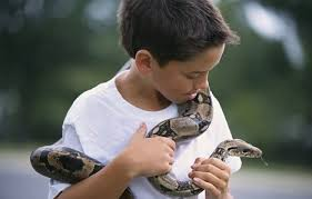 Reptiles can give children salmonella