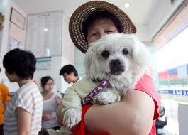 China Pet Policy
