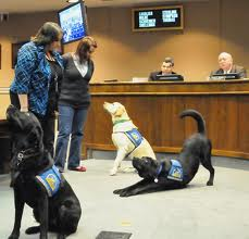 Courthouse Dogs