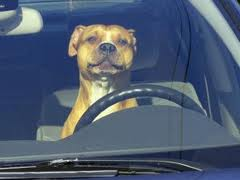 Don't Dog and Drive