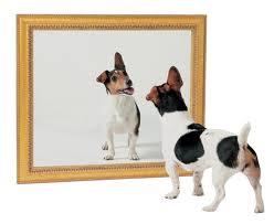 Mirror Dog