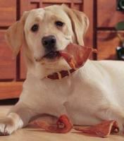 Recalled Pet Treat