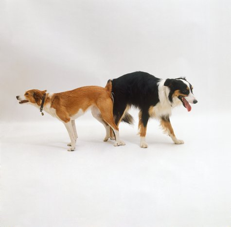 Dog Tie Spurs Frantic Calls To Dr. Debbie