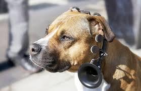 Dog to Human Translator