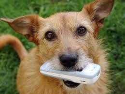 Dog Get Cell Bill