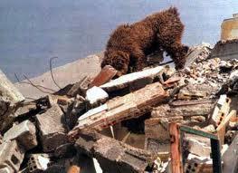 Dog in Earthquake