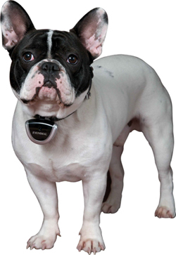 Eyenimal Pet Video Camera - Were giving one away!