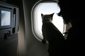 Fly the Furry Skies