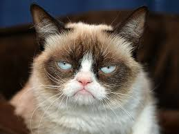 Grumpy Cat not so grumpy on Animal Radio®
