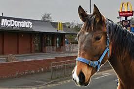 Horse inside McDonalds