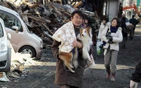 Japan's Pets
