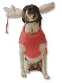 Ladybug the Animal Radio® Studio Stunt Dog