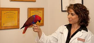 Dr. Lauire Hess is on Animal Radio®