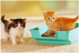Litter Box issues solved