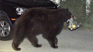 Bear gets float