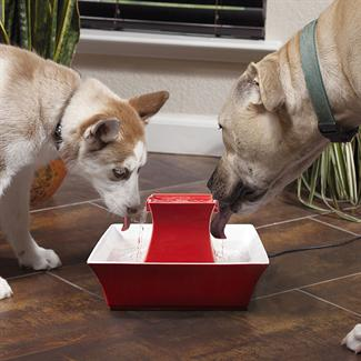 Win a PetSafe Pagoda Fountain