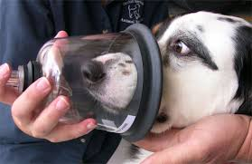 Pet Oxygen Masks on Animal Radio®