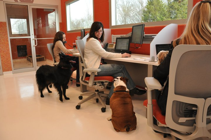 Best pet friendly companies