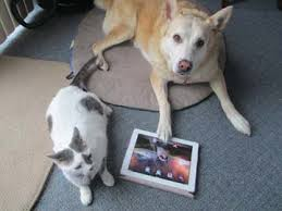 Pets destroy electronic devices