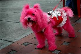 Use Kool-Aid to dye dog