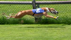 Greyhound racing banned