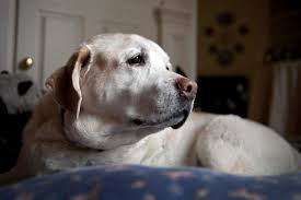 Dogs get dementia