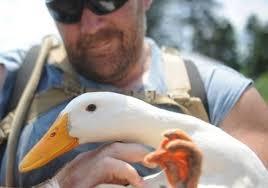 Service Ducks?