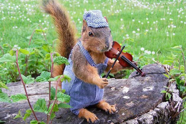 Sneezy Squirrel is on Animal Radio