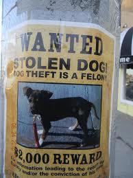 Stolen Pet