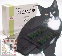 Kitty Prozac