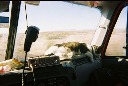 Taking Your Pet To Work