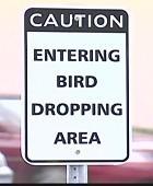BirdPoopSign.332.jpg