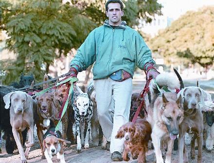 KSR Pet Care Canine Walking, Pet Sitting | WM