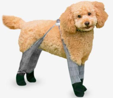Dog Wearing Walkee Paws