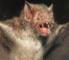 Bat with open mouth