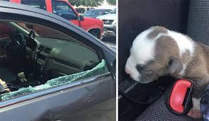 Puppy Removed from Car After Breaking Window