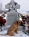 Dog Holds Vigil