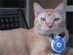 Cat Cam