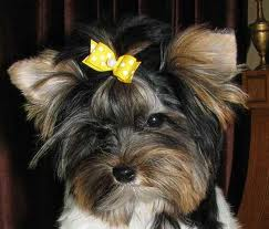 Dog wearing bow